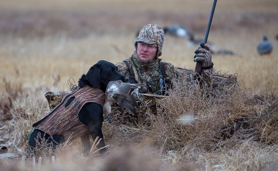 Ulu delivers a Pintail to Scott Stephens during a a hunt in the Canadian Prairies.